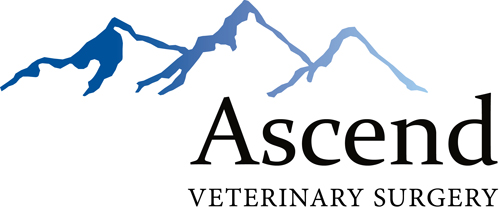 Ascend Veterinary Surgery